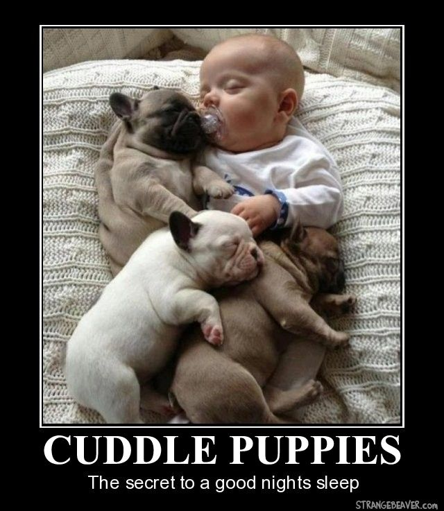 Motivational Monday 817 Cute baby animals, Dogs, kids
