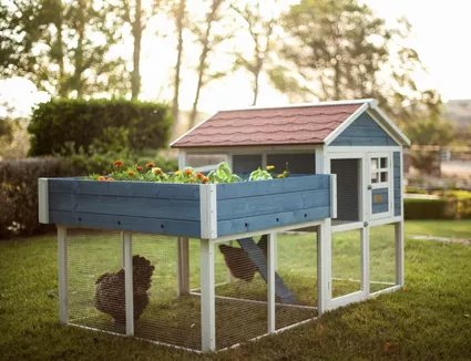 This Is What to Know When Planning a Chicken Coop