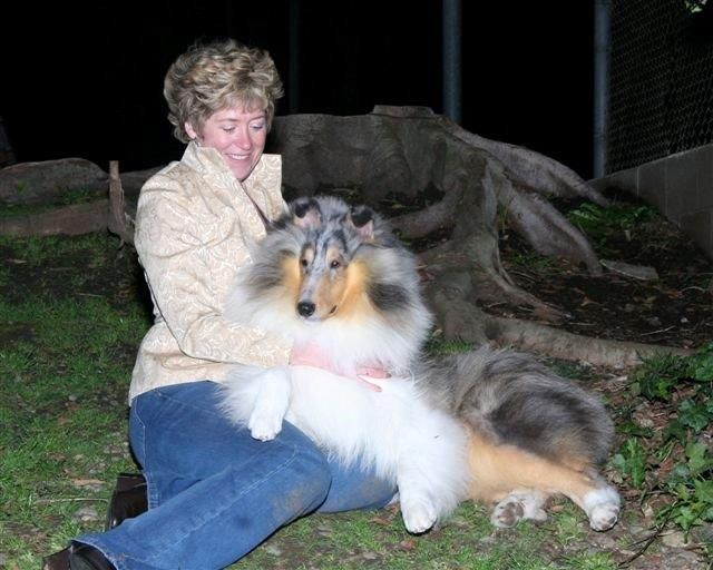 Tallywood Collies Collie Rough Collie Doggy
