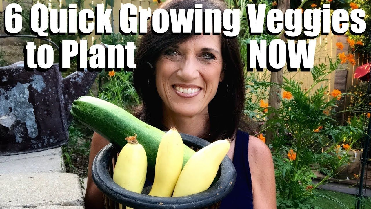 6 Quick Growing Vegetables To Plant Now In Late Summer For 400 x 300