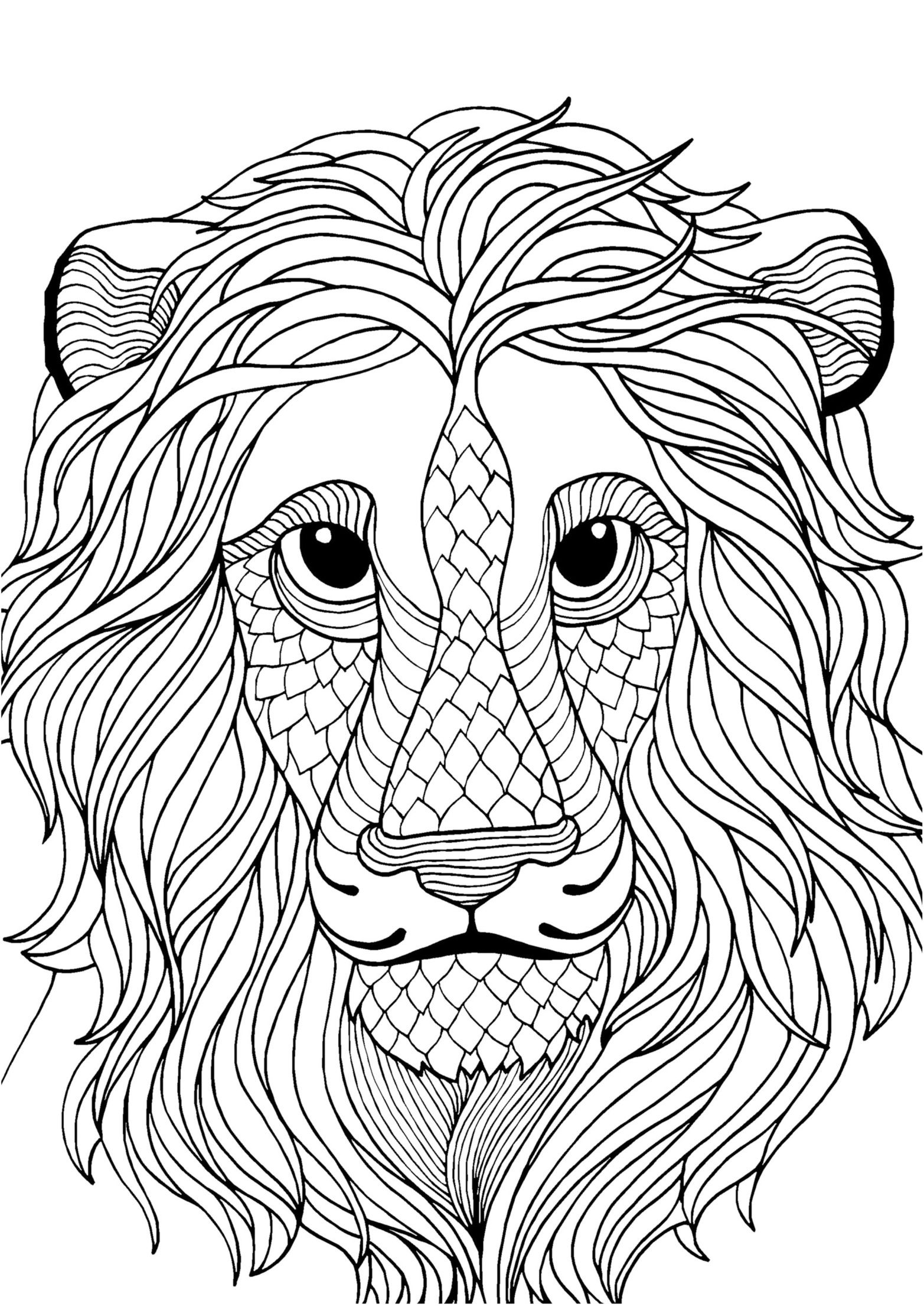 Lion adult colouring page Colouring