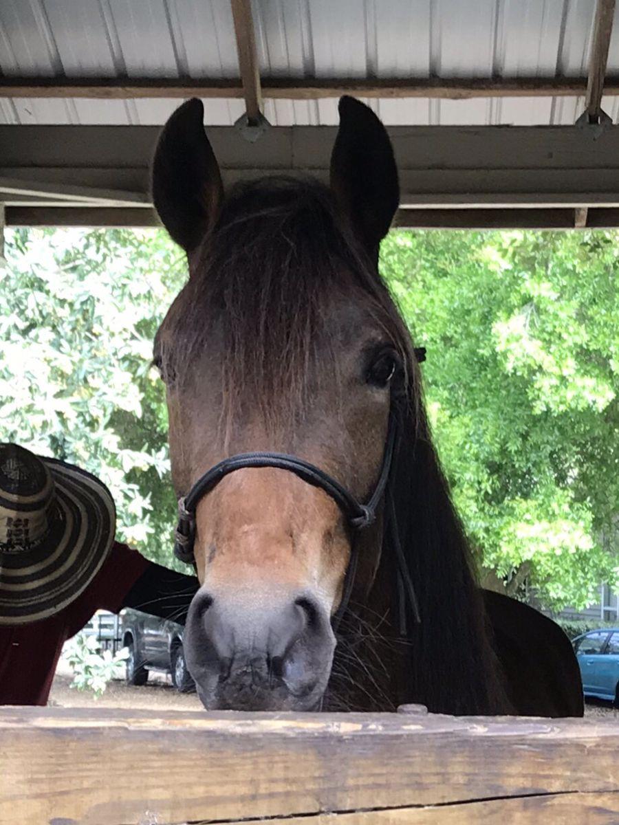 Tai in Gainsville   Horses, Animals, Geek stuff