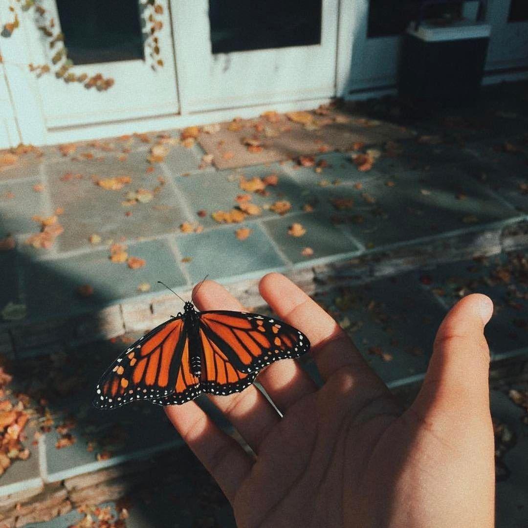 #butterflykisses