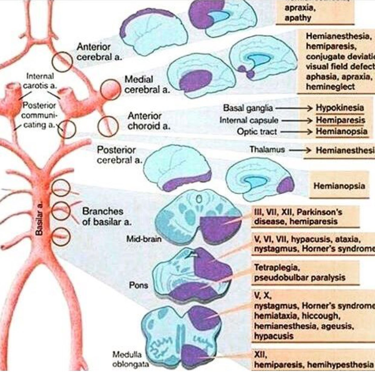 Pin by Gerardo Valenzuela on Neuroimagen | Pinterest | Anatomy ...