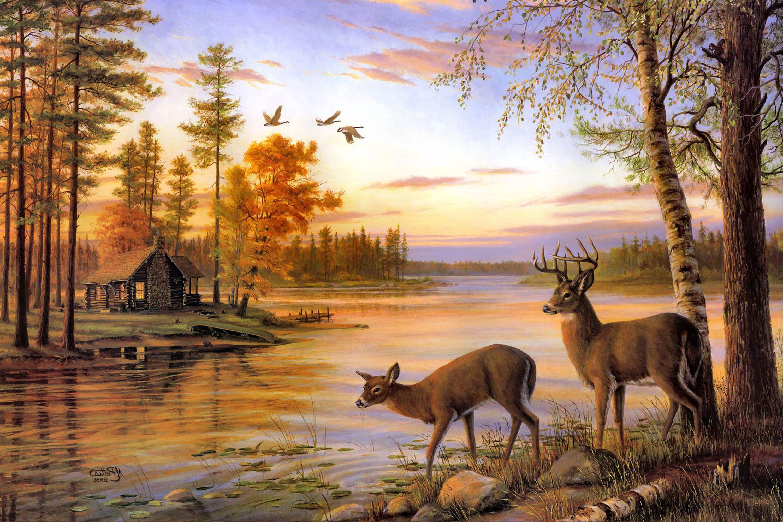 Two Deer Drink Water River Sunset In 2019 Portrait Arts Wallpaper