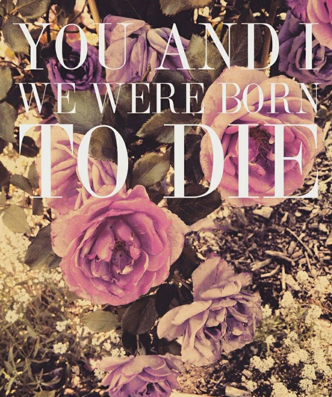 Lana Del Rey #LDR #Born_To_Die