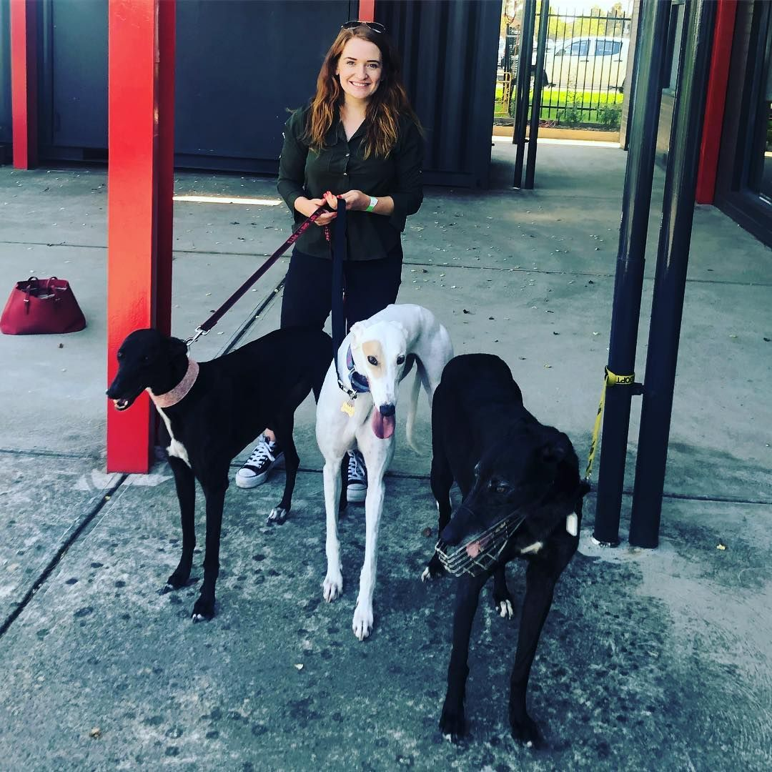 Watch The Best Youtube Videos Online Rolling With The Homies At Sandown Community Day Greyhound Rescue Greyhound Adoption Rescue Dogs Greyhound
