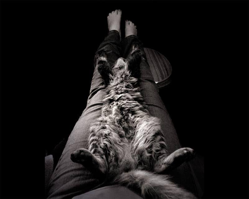 Mici U Nesvijesti O Www Sanmagazin Com Cat Sleeping