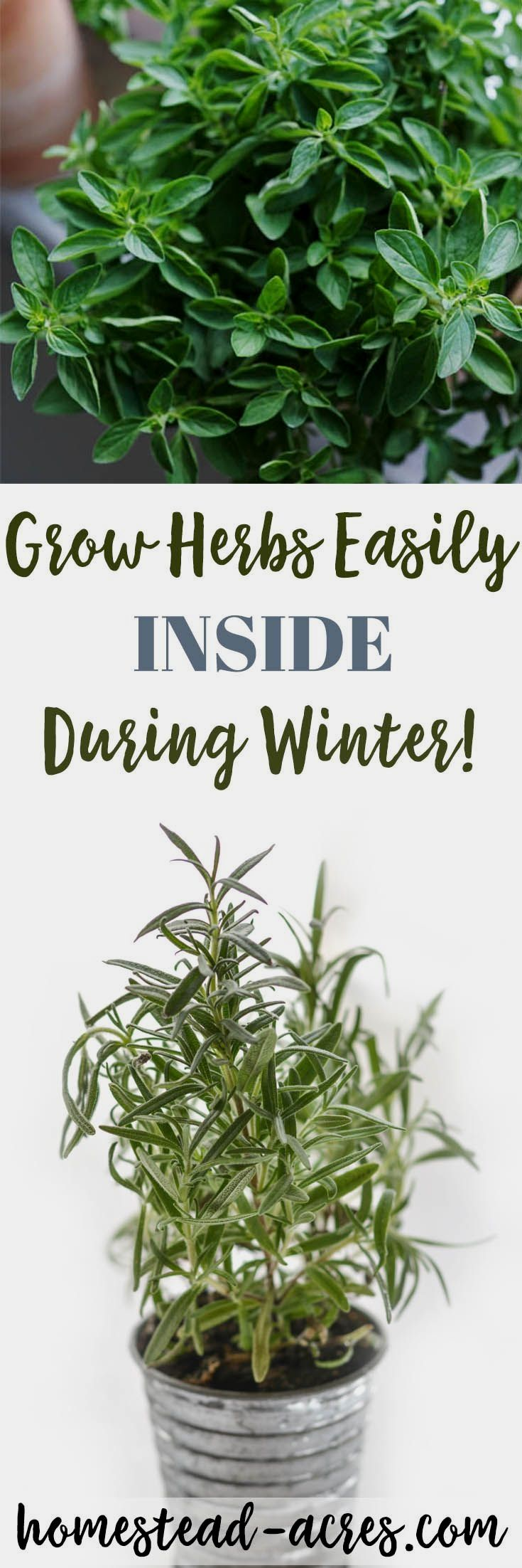 Easy herbs you can grow inside in the winter indoor herb