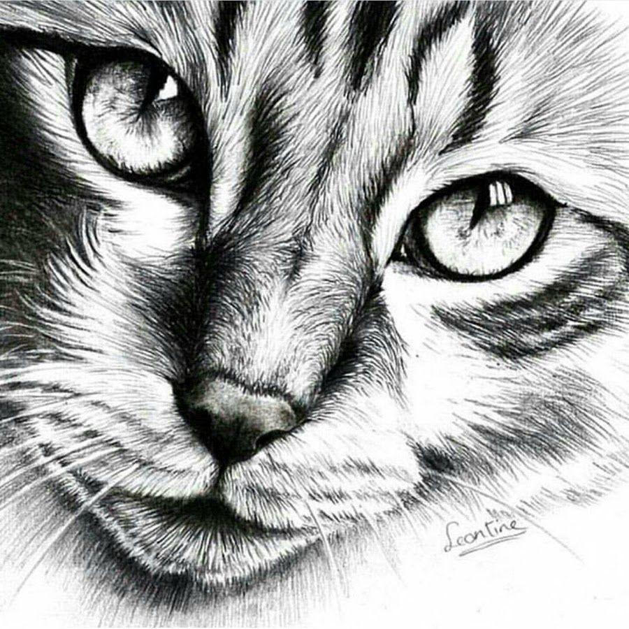 красивые картинки котов простым карандашом