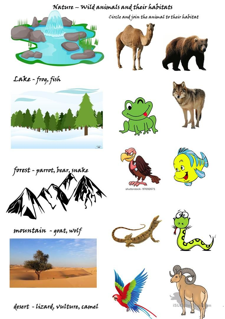 small resolution of Wild animals and their habitats worksheet - Free ESL printable ...