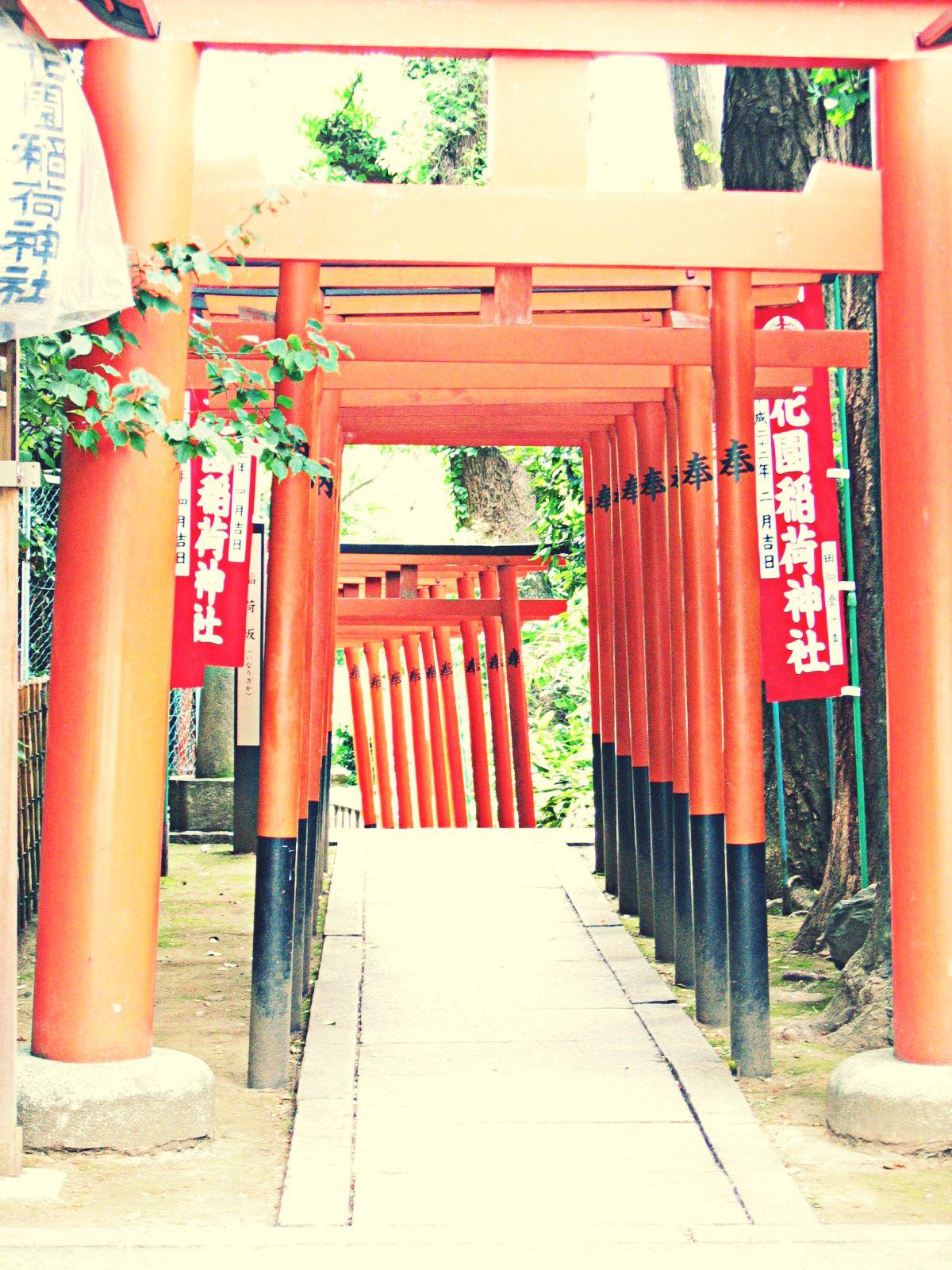 Ueno park 3 - Toori