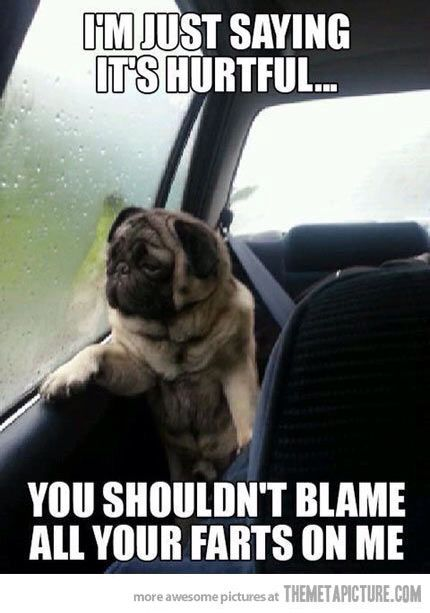 Good Morning Sweethart I Love You Wish I Could Touch You Funny Dog Memes Funny Dog Pictures Pug Memes