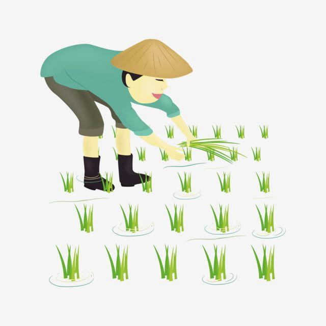 Gambar Mang Ilustrator Memasukkan Anak Pertanian Nasi Petani Kartun Mengambil Png Dan Vektor Untuk Muat Turun Percuma ภาพวาด ผ าป กม อ กราฟ ก