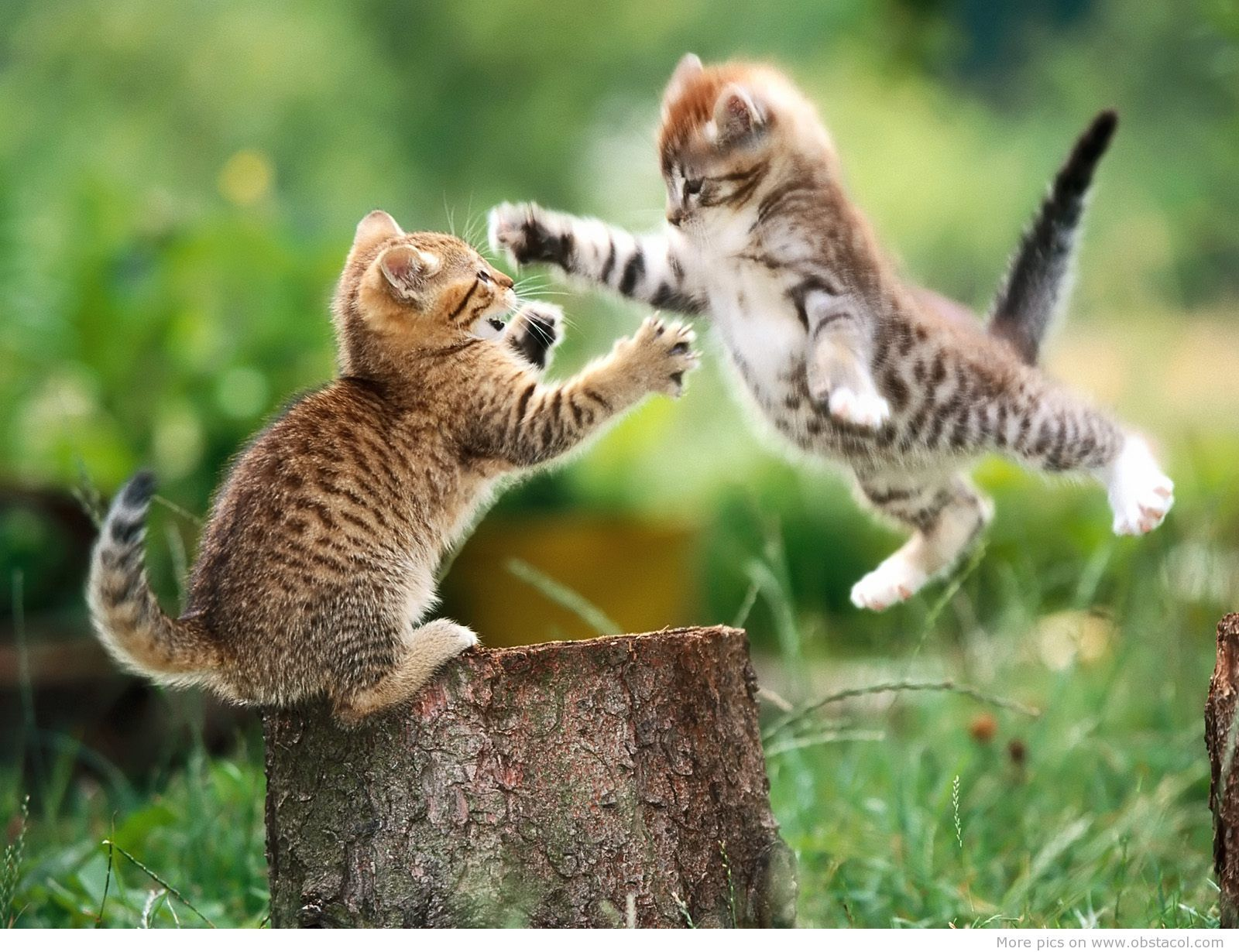 So Cute Cute Animal Pictures Cute Animals Funny Cat Wallpaper