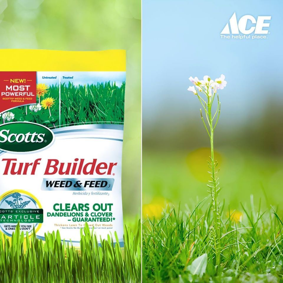 Weed And Feed Fertilizer Can Help Prevent Nuisance Plants From Growing Helps Your Turf Grow