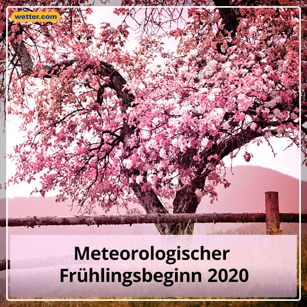 Spruch Des Tages Spruche Spruch 3tage Wetter Wettercom Tipps Tricks Spruchdestages Fruhling 2020 Lachenistgesund In 2020 Zitat Des Tages Zitate Spruche