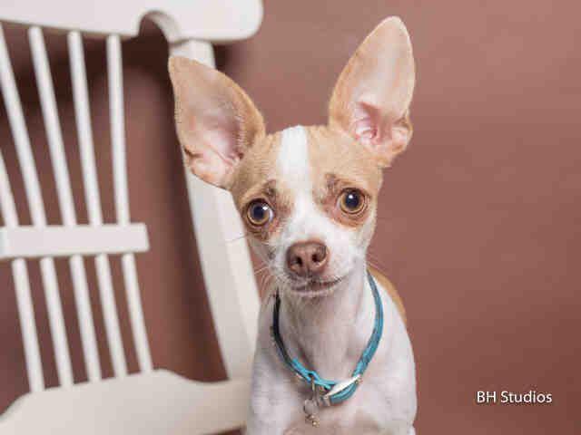 Suzie Houston Texas Petharbor Com Animal Shelter Adopt A