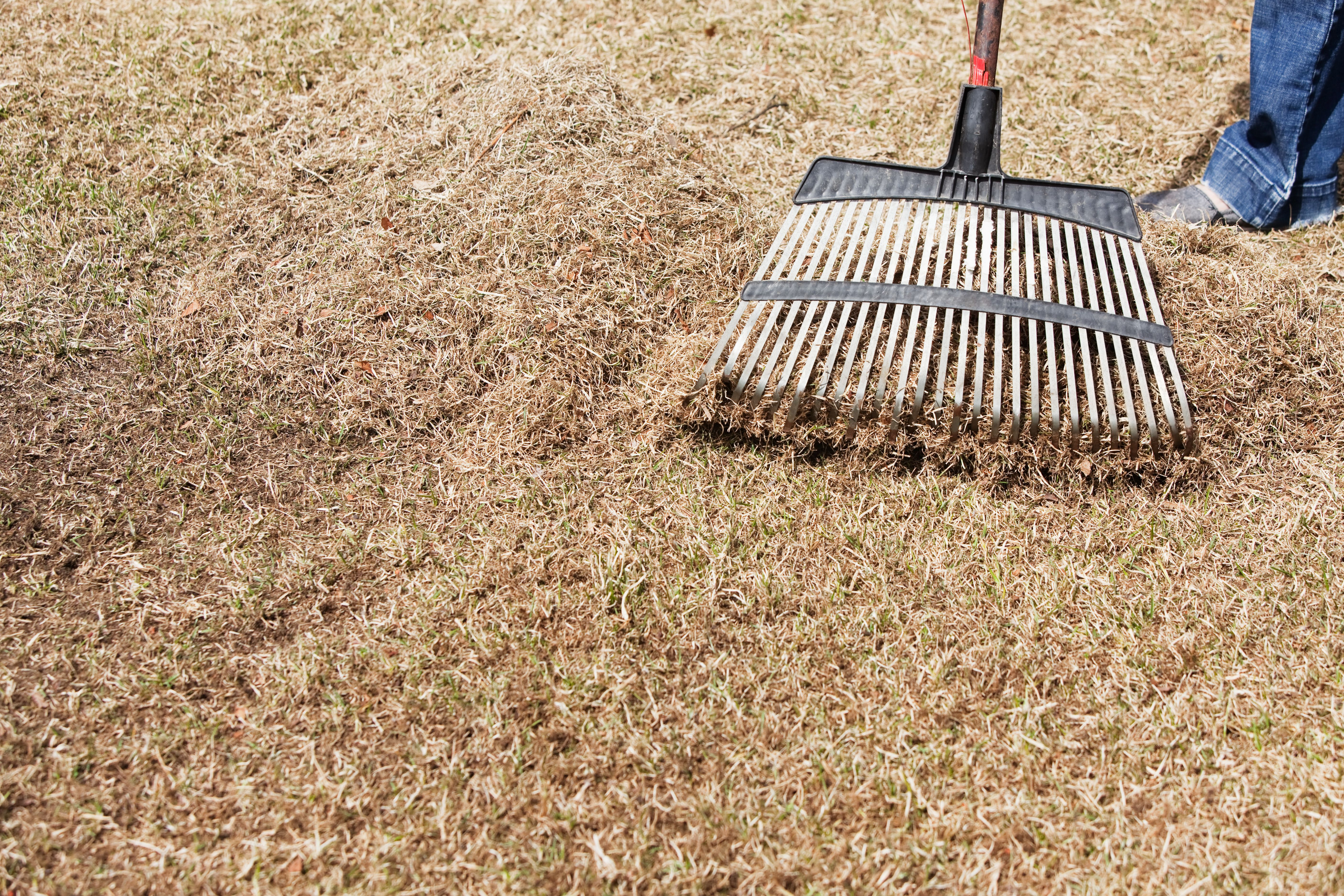 Dethatching and aerating your lawn dethatching lawn