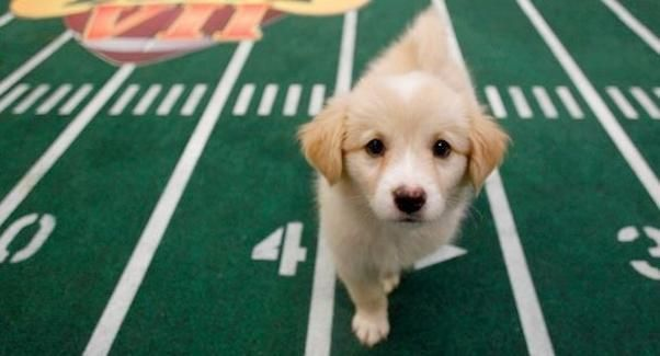 Puppy Bowl Overshadowed By League's Rampant Heartworm Pill Abuse | Puppy Bowl  #PuppyBowl