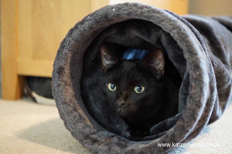 Nubia Hide and Seek! Katzenworld in 2020 Pet fox, Pet