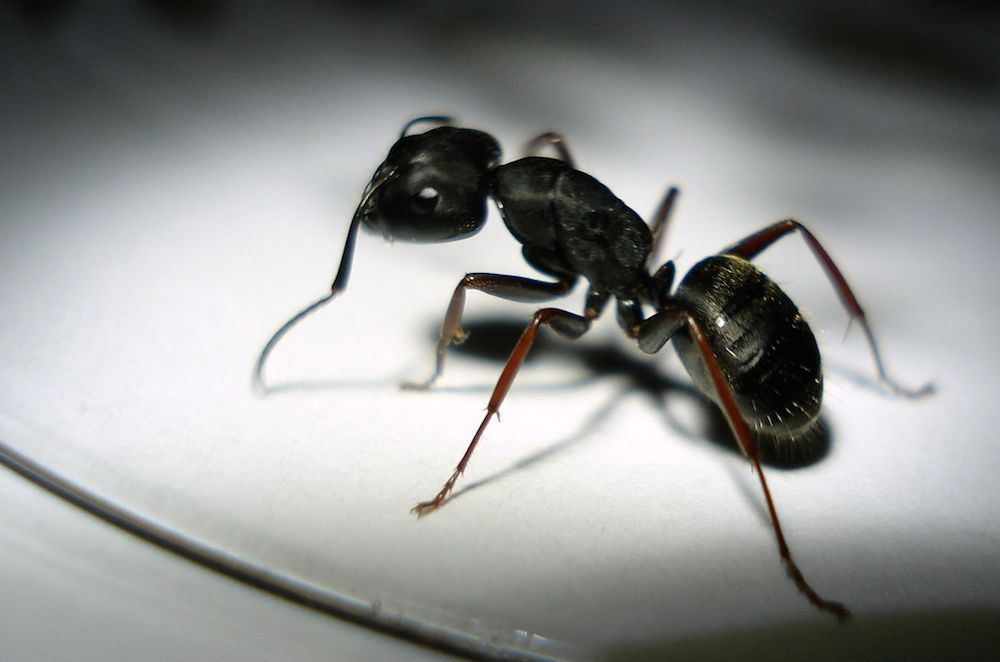 This simple nontoxic trick is a little miracle ... and no ants were harmed in the writing of this story.
