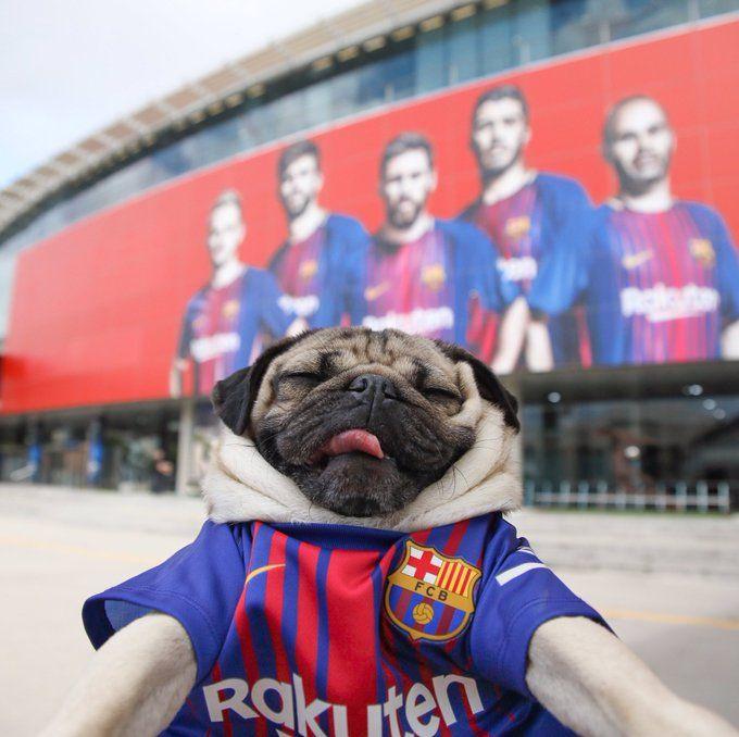 Vstroennoe Doug The Pug Celebrity Dogs