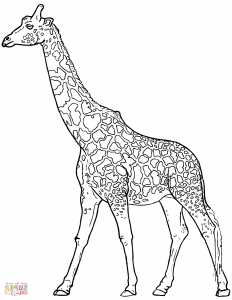 Zürafa Boyama Sayfaları Sınıf öğretmenleri Için ücretsiz özgün