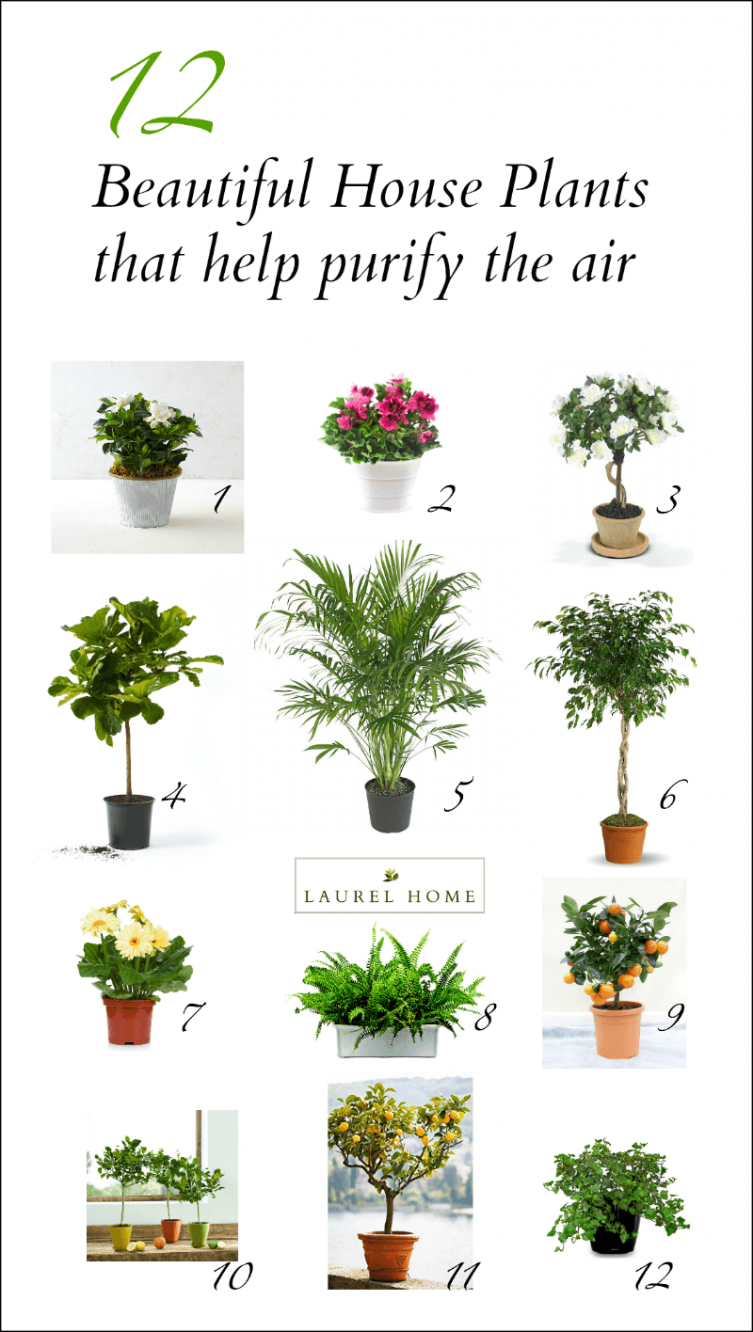 The Best And Most Beautiful House Plants For Cleaner Air Air Purifying House Plants Plants House Plants