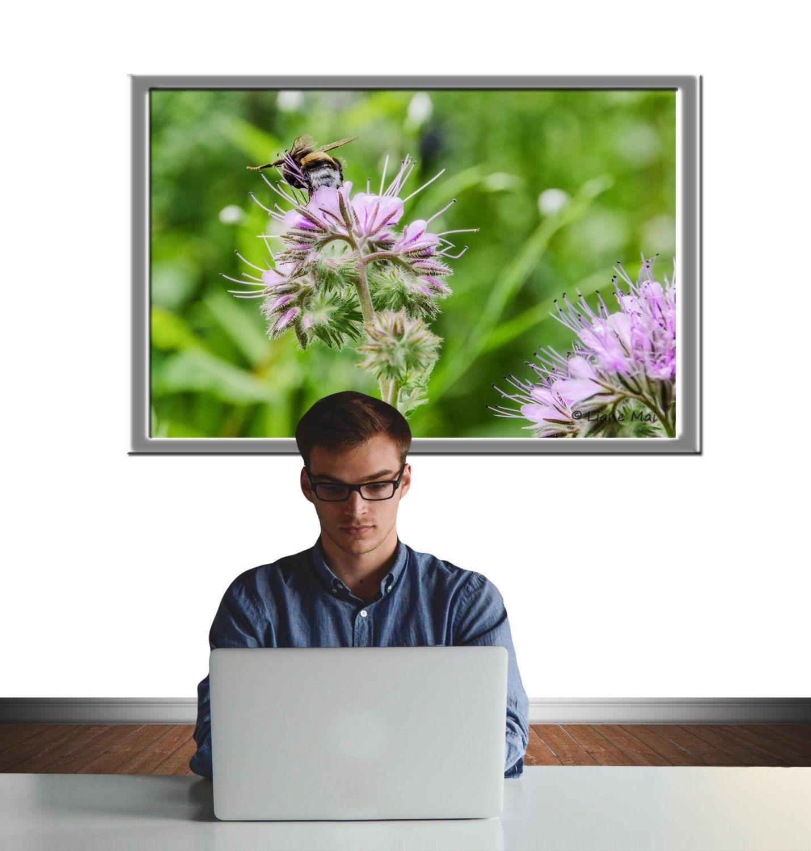 Hummel, Wandbild, Leinwand, Digital Download, Naturfotografie, Blumen, Decorativ, Geschenk, Geburtstage, Hochzeit von PhotoDreamWorldArt auf Etsy