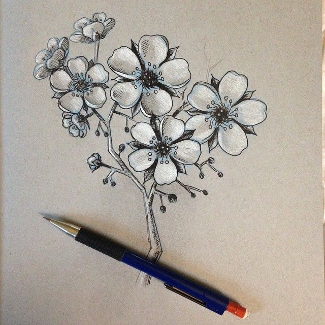 Practicing drawing Cherry Blossoms. Trying to learn the ...