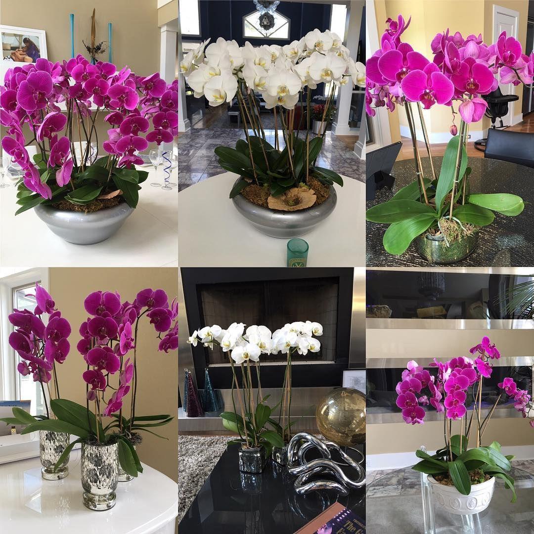 Instagram f l o w e r s pinterest bridges and orchid