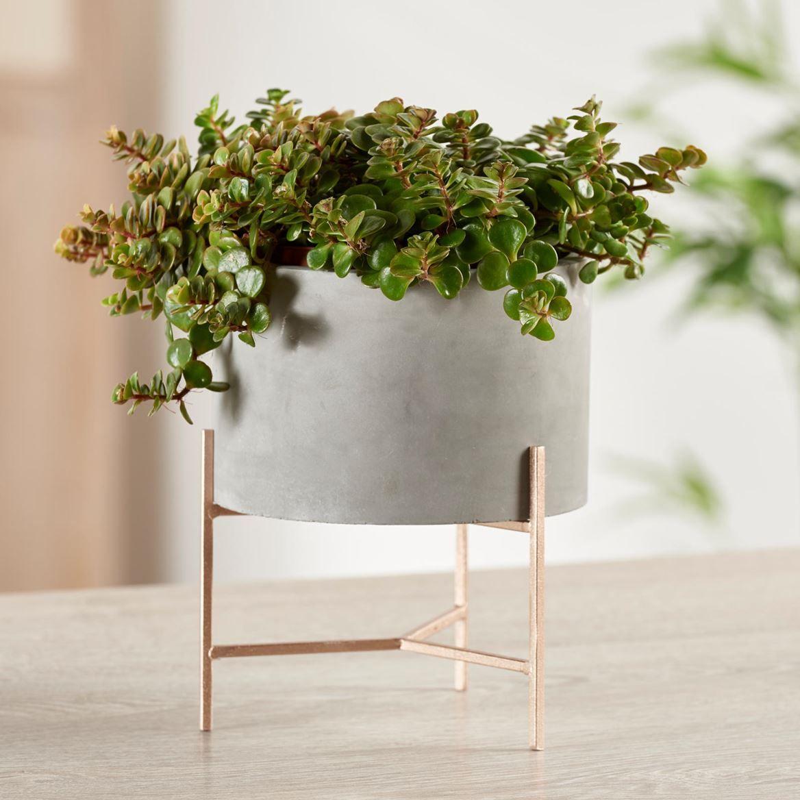 Meuble Salle De Bain Acheter ~ evita vaso com suporte cinzento h 19 cm 16 cm pinterest pots