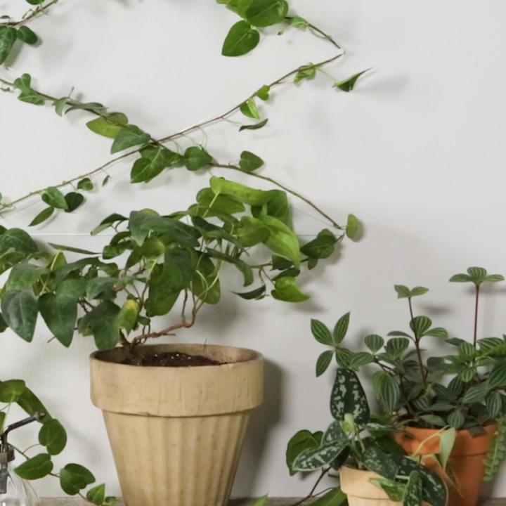 DIY Invisible Trellis #indoorgarden