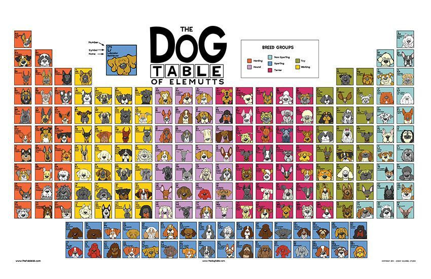 The Dog Table Poster Features Illustrations Of 186 Dog Breeds Dogs