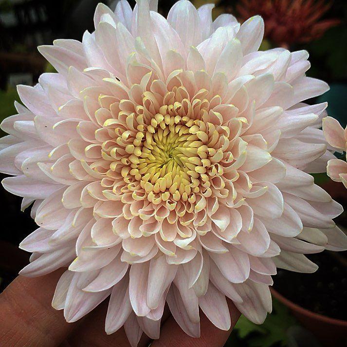 Pin On Green Pink White Blush Flowers