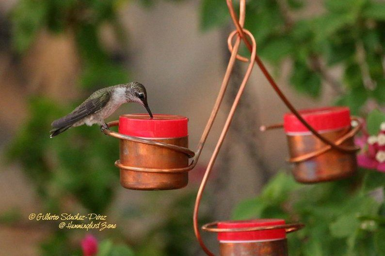 Three Station Hummingbird Feeder, Bee and Wasp Proof
