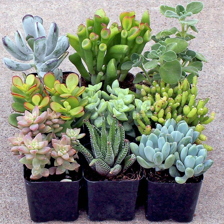 Indoor Succulent Set Of 9 Indoor Vegetable Gardening Succulents