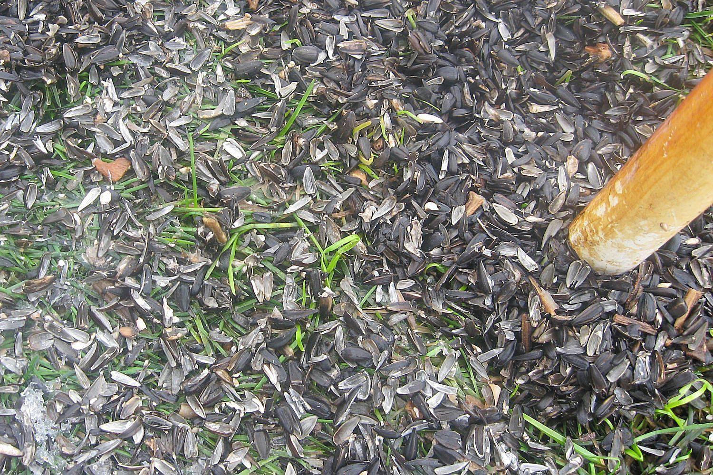 Easy Tips for Cleaning Under Bird Feeders | Backyard birds ...