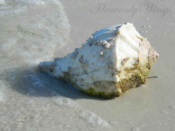 Peaceful Beach Photography Beautiful Shell 8x10 by HeavenlyWings, $25.00