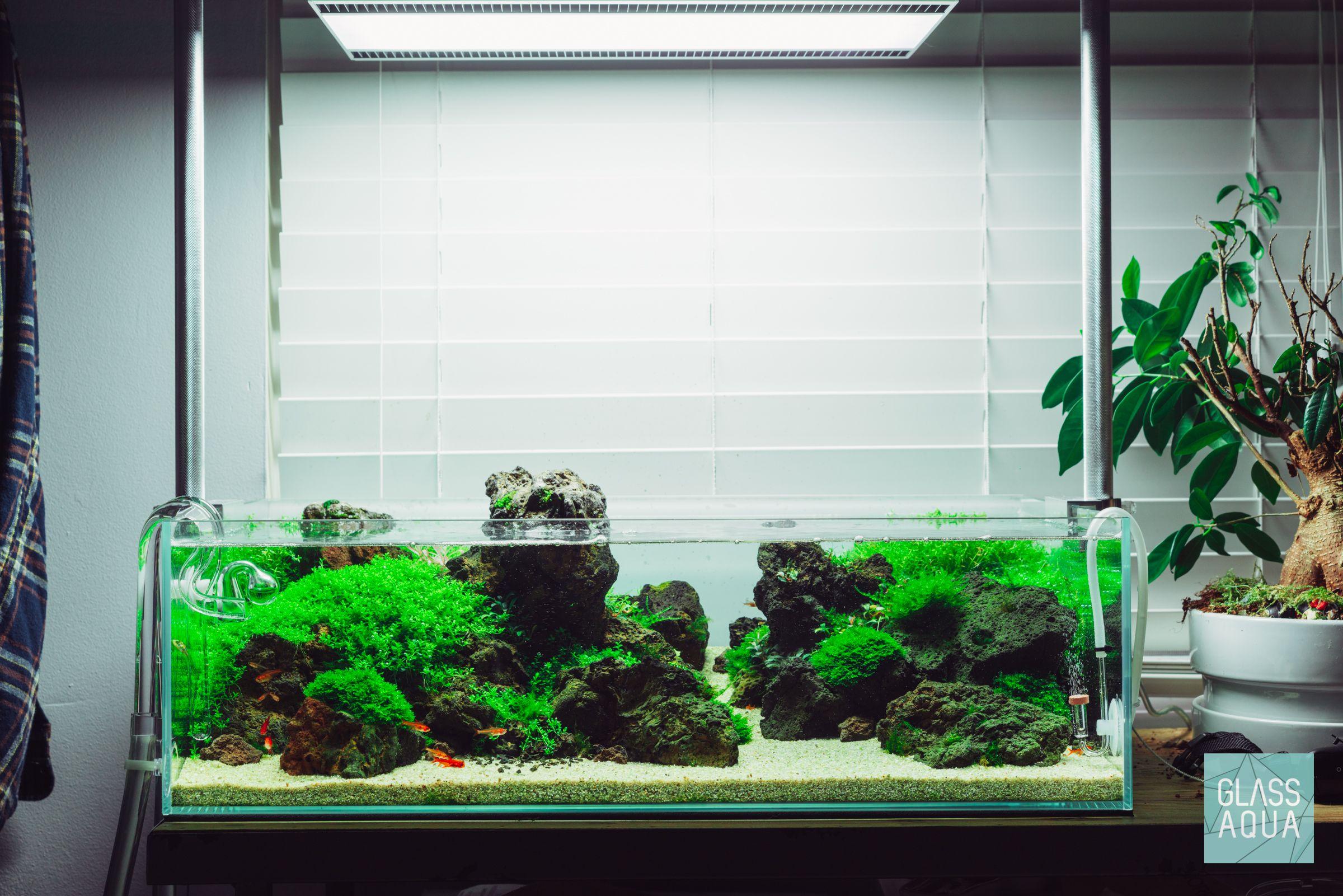 Tropic Islands Planted Aquarium Planted Aquarium Aquascape Design Aquarium