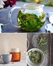 Everything You Need To Know About Tea