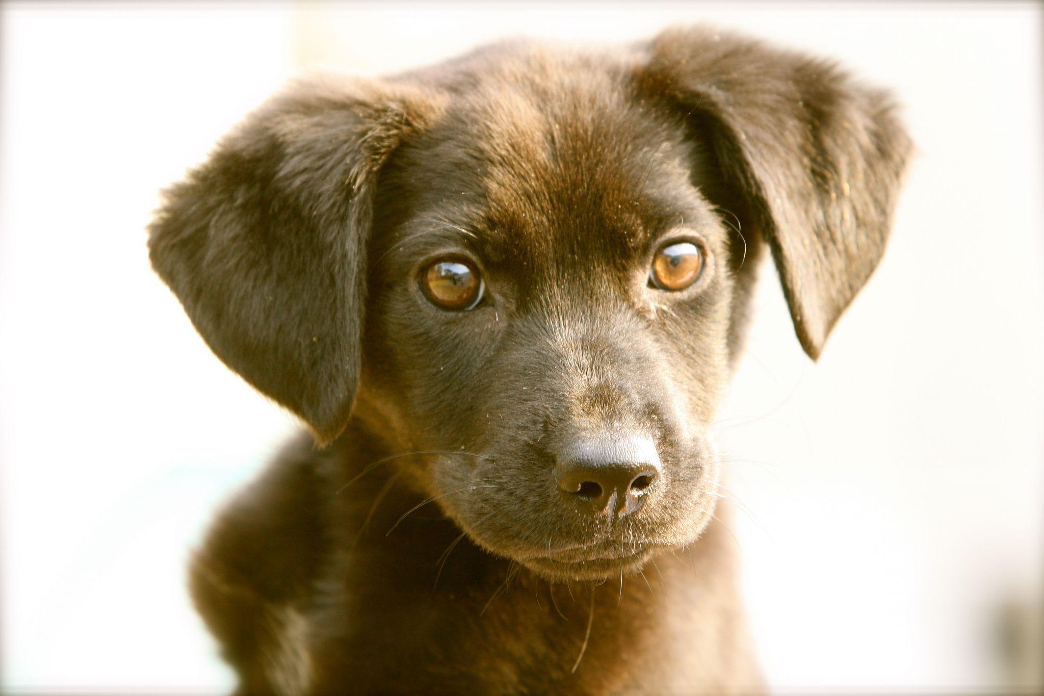 20 Ways to Save Big Bucks on Pet Supplies Teach dog to