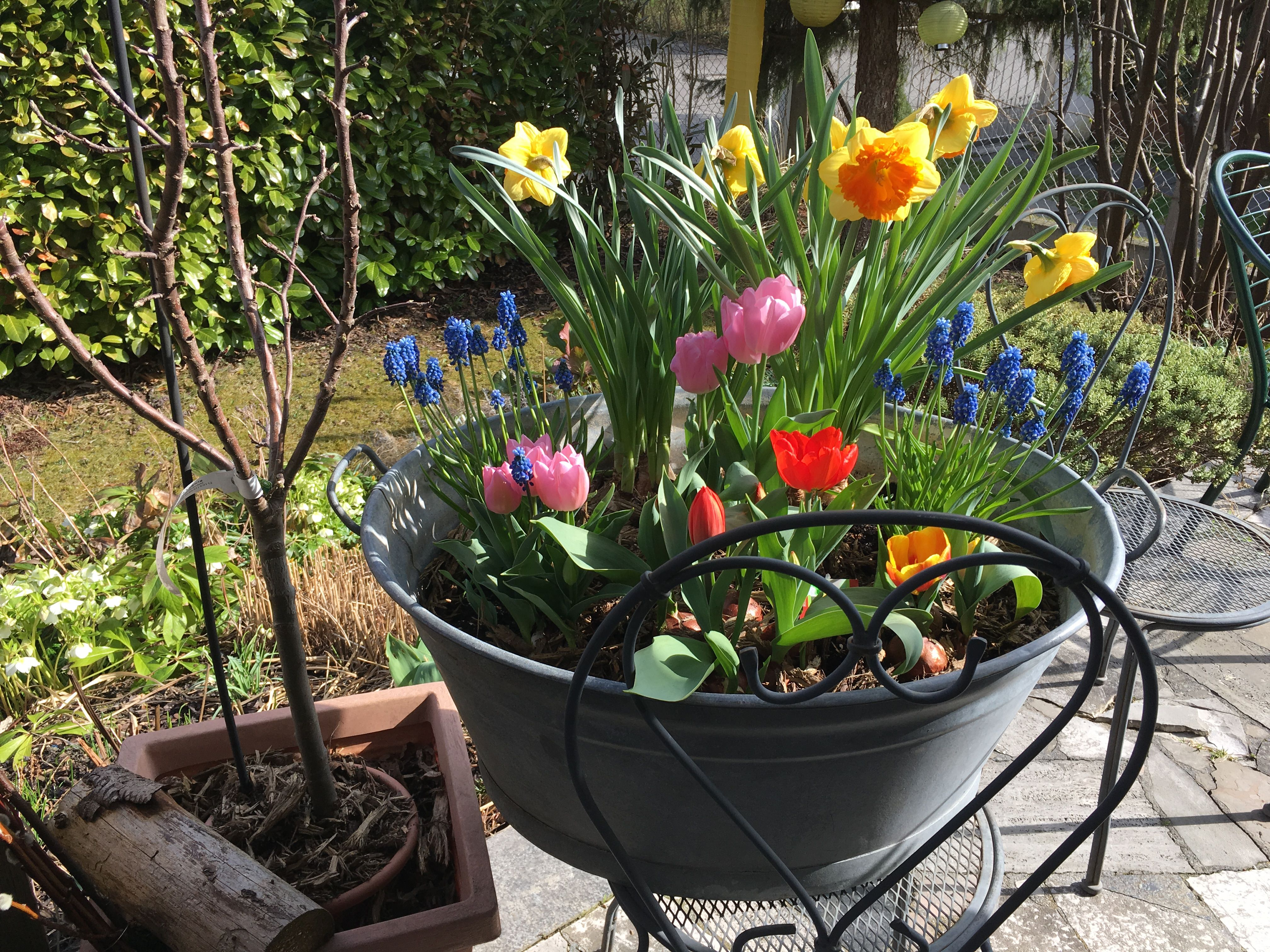 Frühling in der Wanne 😍