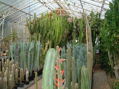 Serre des grands sujets jardins p pini re plantes grasses - Jardin des plantes angers horaires ...