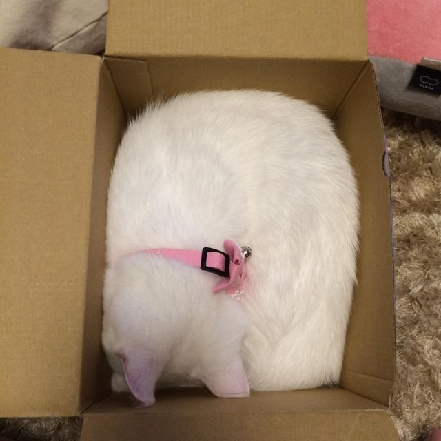 White cat in the box.... and sleep <3