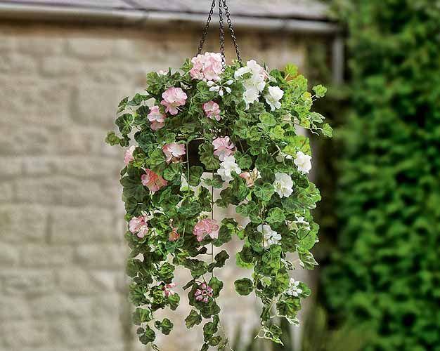 Tanaman Hias Gantung Tahan Panas Belajar Berkebun Tanaman Bunga Bunga Gantung