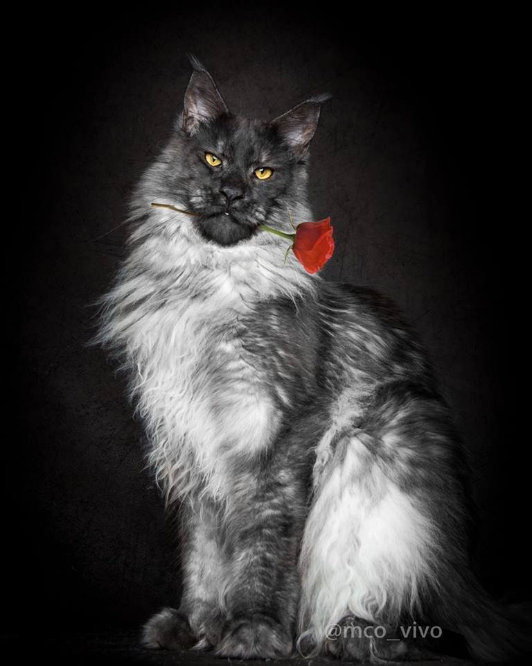 What It Means To Be A Tabby Cat Tabby Cat Beautiful Cats Grey Cats