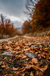 1000 Best Wallpaper Samsung Galaxy S10 Plus Full Hd In 2020 Samsung Wallpaper Leaf Photography Autumn Leaves Wallpaper