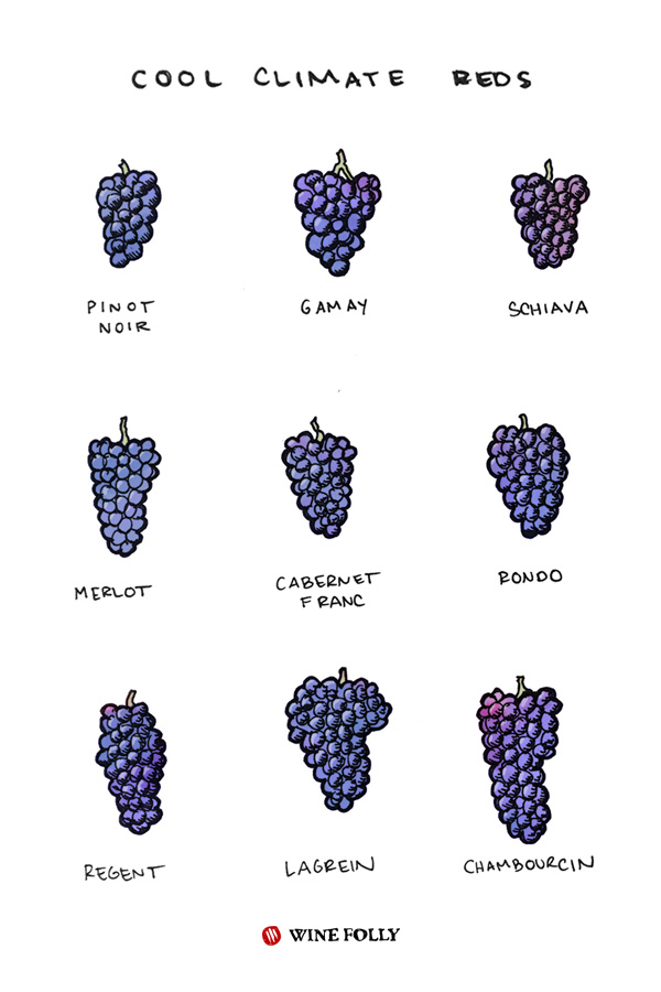 What Are Cool Climate Wines Wine Folly In 2020 Wine Folly Wines Wine Chart